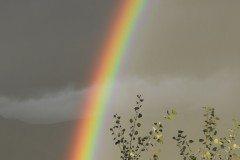 Rainbow 1 Resized