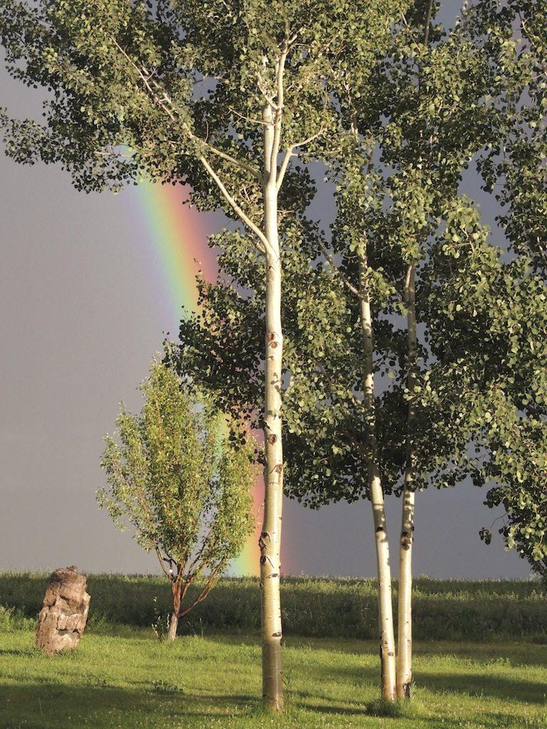 Rainbow 2 Resized
